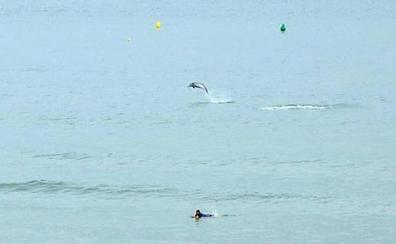 Espectáculo de delfines en San Lorenzo