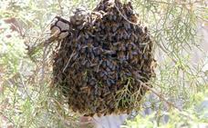 Los incidentes provocados por las abejas casi se multiplican por cuatro por la alta floración en primavera