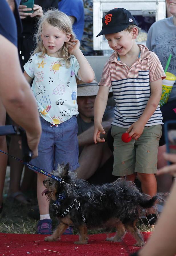 Concurso para elegir al perro más feo del mundo en California