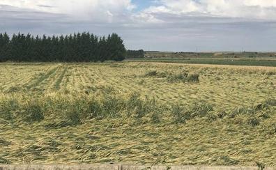 Las lluvias y el granizo «destruyen» el campo leonés que se enfrenta a un nuevo año «catastrófico»