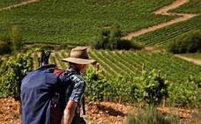 El enoturismo crece el 11% en la ruta de El Bierzo y se consolida con más de 27.000 visitantes