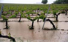 Los enólogos de Ribera defienden el buen estado del viñedo y alertan de un verano difícil