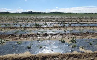 El Ayuntamiento de Fresno de la Vega pide la declaración de zona catastrófica por la tormenta que el 29 de junio arrasó los cultivos