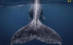 Las fotografías más espectaculares de este año en el mundo de la naturaleza