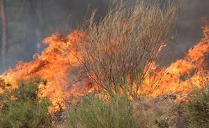 Un incendio intencionado calcina 0,2 hectáreas de matorral en Palanquinos