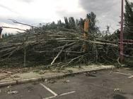 Cae un árbol ante Sáenz de Miera