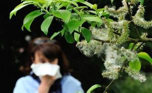 Los alérgicos leoneses ya respiran tranquilos