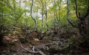 La Diputación de León destina 70.000 euros a las entidades gestoras de las Reservas de la Biosfera de la provincia