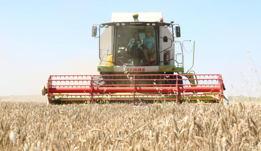 Los campos de trigo, más llenos que nunca