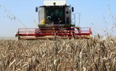 La cosecha de cereal en 2018 rondará el medio millón de toneladas en la provincia de León