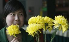 Investigadores españoles piden precaución en el consumo de flores en la alta gastronomía