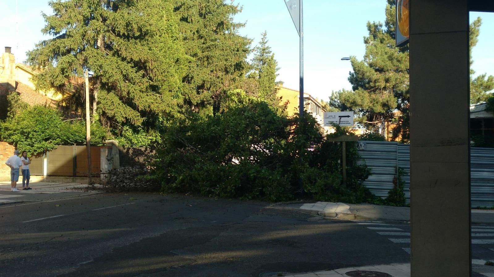 La caída de un árbol corta la avenida Corpus Christi de San Andrés