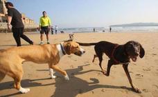 Las Playas para perros de Asturias