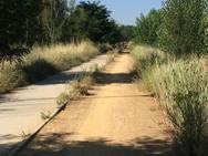 Estado del paseo del río Bernesga en León a la altura de Puente Castro