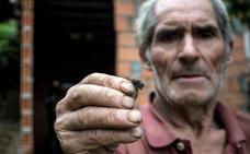 Una mujer de 89 años, hospitalizada tras sufrir picaduras de avispa velutina en Orense