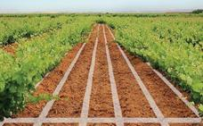 El placer de correr entre viñedos