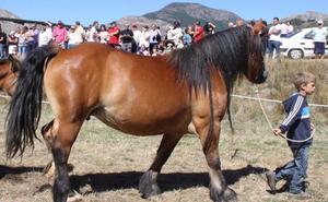 El certamen de Hispano Bretón de San Emiliano se estrena como fiesta de interés turístico provincial