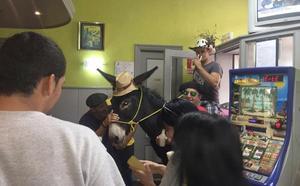 En Boñar, los burros al bar