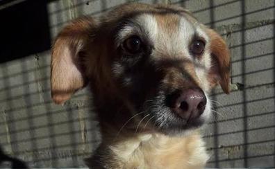 El Ayuntamiento debe 18.000 euros a la Protectora que se ve obligada a no seguir con la recogida de animales
