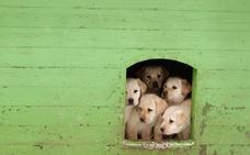 Cuatro detenidos en Toledo por vender por Internet cachorros de perro que morían tras la compra