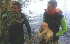 El Greim rescata de las aguas del río Esla a un cachorro de perro abandonado
