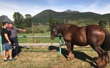 Puebla de Lillo une lo mejor de la ganadería de la montaña