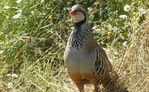La Diputación de León respalda el proyecto para la recuperación de la población de aves asociadas a los agrosistemas agrícolas