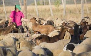 La Diputación colabora con los agricultores y ganaderos que realicen programas de mejora con 120.000 euros