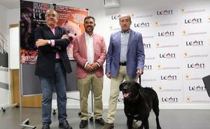 La Exposición Internacional Canina cita a 580 perros de 120 razas en el Palacio de Exposiciones de León