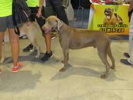 XXI Exposición Internacional Canina de León