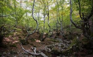 Geoturismo, setas y plantas aromáticas centran los cursos gratuitos de la Reserva de la Biosfera del Alto Bernesga para 2019