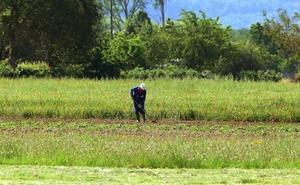 La Junta extiende las ayudas a la fusión de cooperativas a las agrarias que explotan la tierra y el ganado