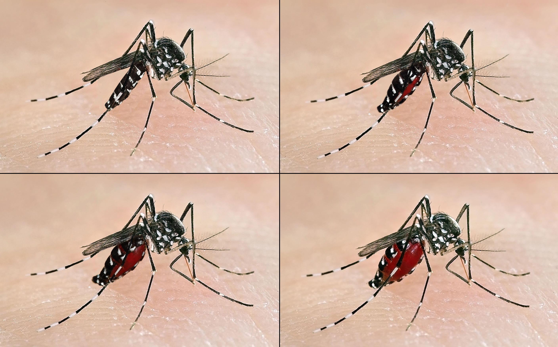 El dengue: una enfermedad sin tratamiento que puede ser mortal