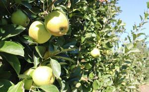 Cofrubi, la mejor fruta del Bierzo