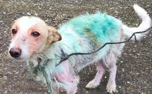 Rescatan a dos perras abandonadas en medio de la N-VI en Roperuelos del Páramo por enfermar de sarna