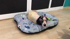 Abandonan en Valcabado del Páramo dos perras enfermas de sarna