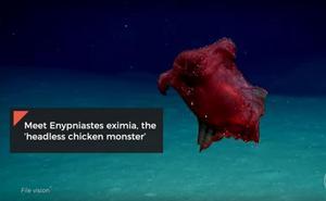Un vídeo muestra al 'monstruo del pollo sin cabeza' en el Océano Austral