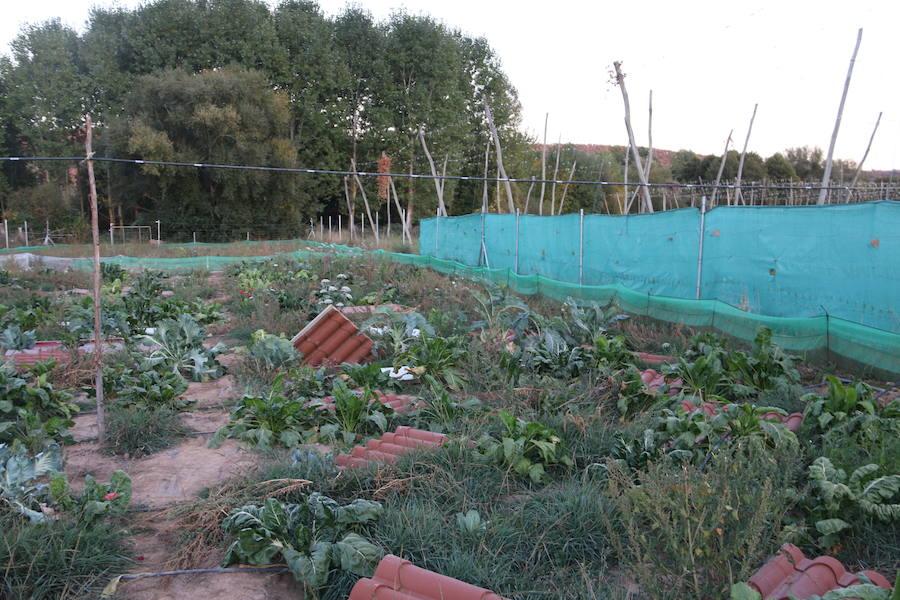 Cría de caracoles en León
