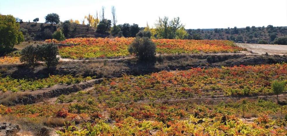 La vendimia superará los 303 millones de kilos de uva, el 74% más que en 2017