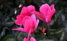 Una flor para un recuerdo especial