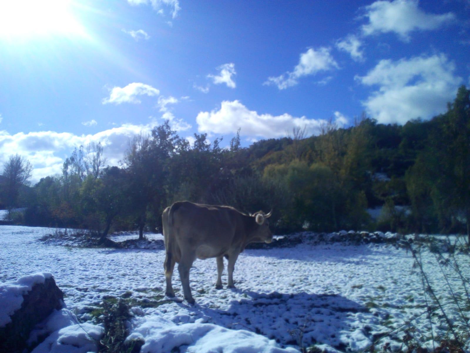 La comarca de Valderrueda inicia la temporada de nieve