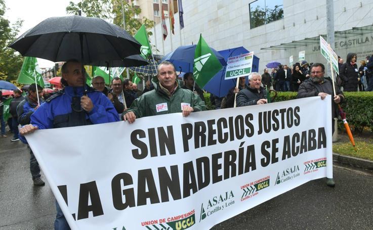 Protesta de ganaderos de ovino de leche en Valladolid