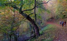 Bosques asturianos para escaparte en otoño