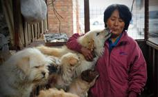 Una ciudad china prohíbe pasear perros durante el día