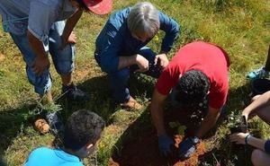 La Diputación repartirá árboles y plantas ornamentales a 49 ayuntamientos y juntas vecinales