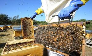La sequía y las heladas provocan un descenso de casi el 80% en la producción de miel en León