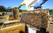 Desplome de la producción de miel en Castilla y León