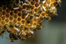 La sequía y las heladas provocan el desplome de la producción de miel
