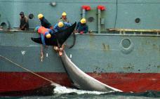 Japón reanuda su caza de ballenas