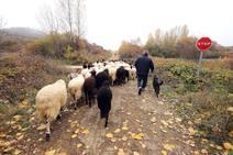Pastor Leonés, entre cabras y ovejas